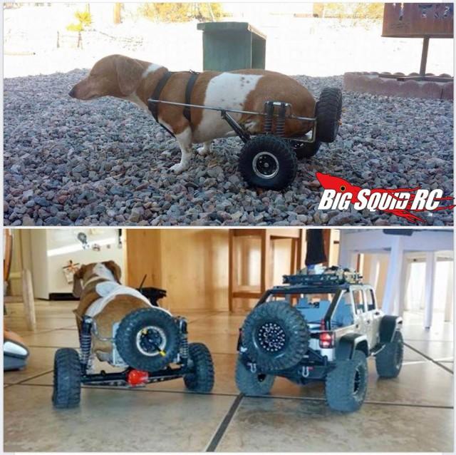 dachshund_axial_wheelchair