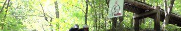 Losi 3XL-E Video